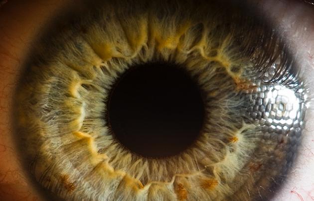 Macro Eyes | Suren Manvelyan