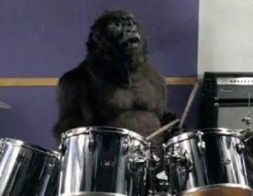 Gorilla – Cadbury Commercial