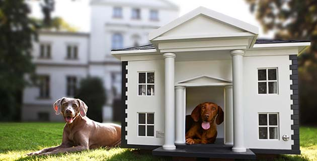Dog Mansions | Best Friends Home
