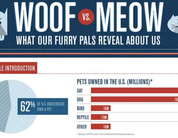 Dog People vs Cat People | Infographic