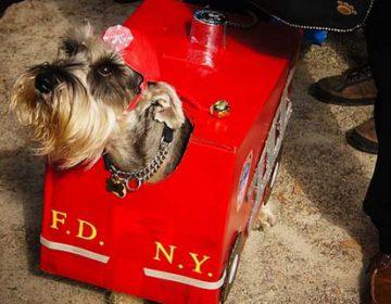 Halloween Dog Parade 2011