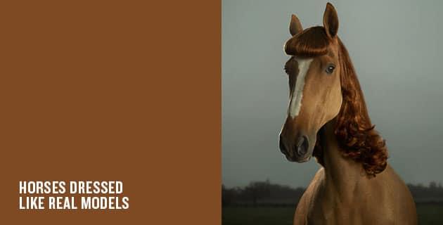 Pony Pin-Ups by JULIAN WOLKENSTEIN