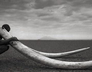 Africa's Wildlife Photography