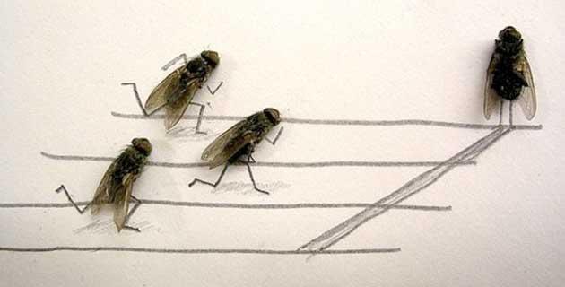 Dead Flies Art by Flychelangelo