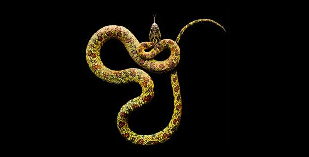 Serpentine | Snakes Photo Project