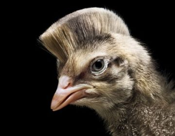 Animal Haircuts | Mladen Penev