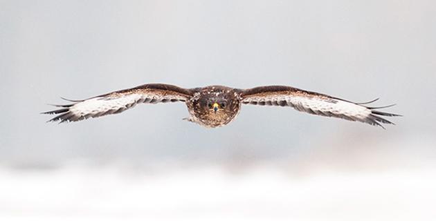 Eagle's Photographies by Csaba Tokolyi