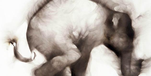 Smoke Rings | Rob Tarbell