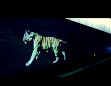 Golden Tiger Projection