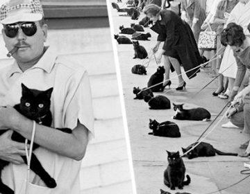 Black Cat Auditions