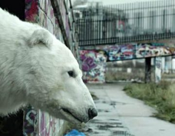 Greenpeace | Homeless Polar Bear