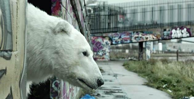 Greenpeace | Homeless Polar Bear