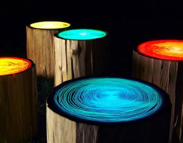 Tree Ring Lights | Judson Beaumont