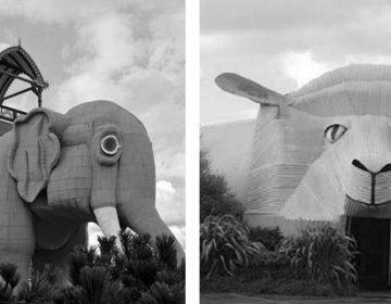 Animal Architecture… !!
