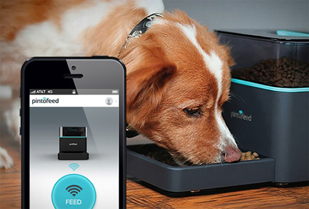 Feed Your Pet from Your Phone with Pintofeed