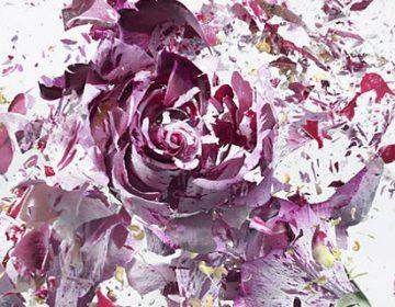Flower Explosions | Martin Klimas