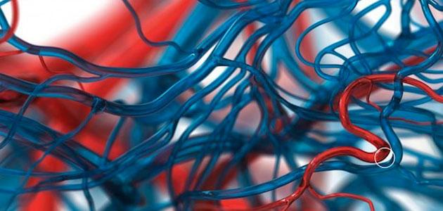 Pepsi circulatory system