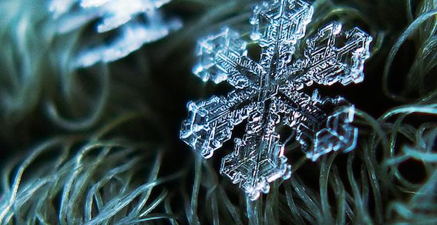 MACRO SNOWFLAKE | Alexey Klijatov