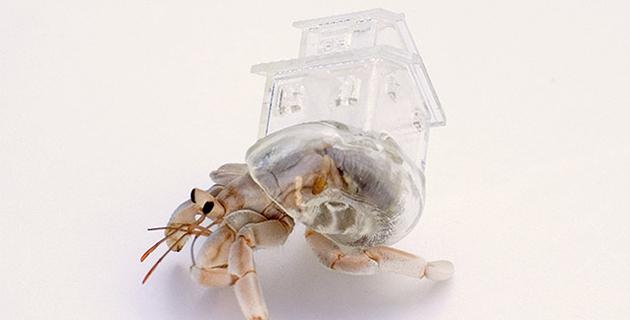 3D Printed Hermit Crab Shell | Aki Inomata
