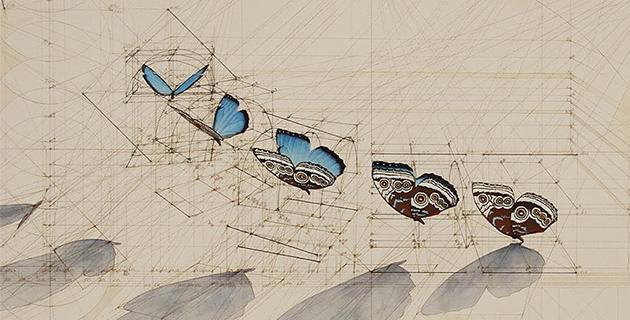 Calculation | Rafael Araujo