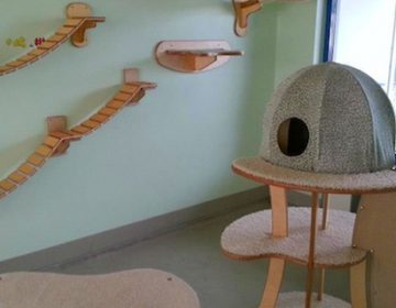 Cats Wall Furniture   Gold Paw