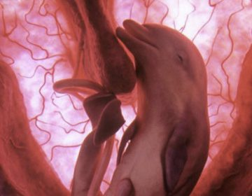 Extraordinary animals in the womb