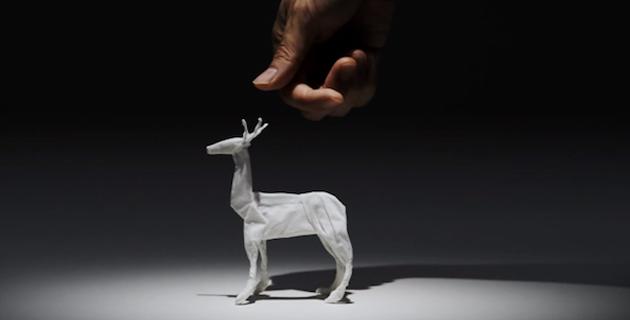 Animal Tissue | Yuki Ariga