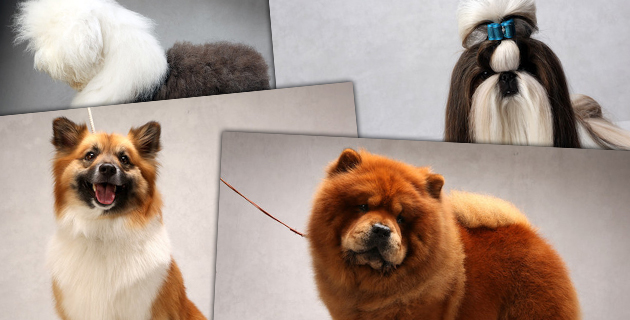 Westminster's Best of Breed