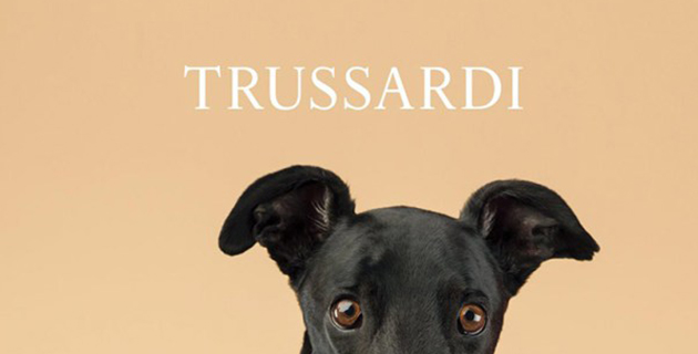 Greyhounds become models for Trussardi