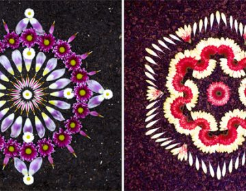 Flower Mandalas art pieces | K. Klein
