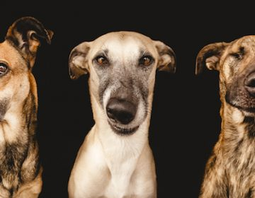 Playful dog portraits by Elke Vogelsang