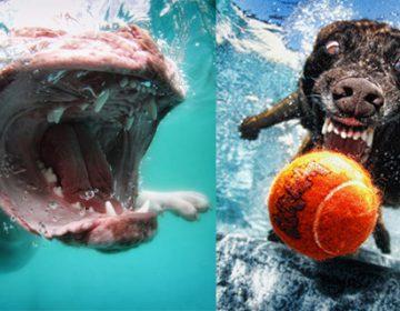 Underwater Photos of Dogs | S. Casteel