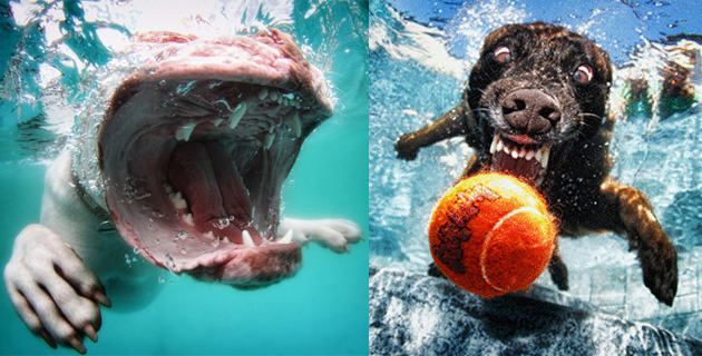 Underwater Photos of Dogs | S. Casteel