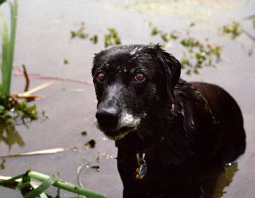 Moving Portraits of 9/11 Rescue Dogs