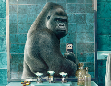 Wildlife selfies   National Geographic