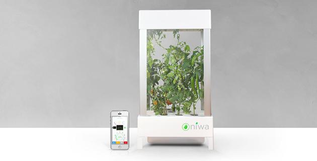 Niwa plant growing system |
