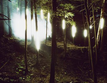 Enchanted Forest | Foresta Lumina