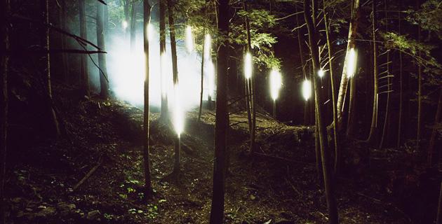 Enchanted Forest | Foresta Lumina