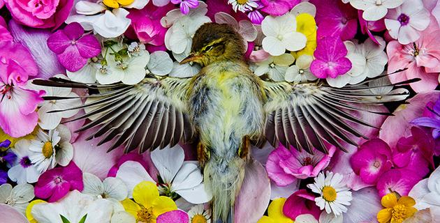 Natura Morta | Maria Ionova-Gribina