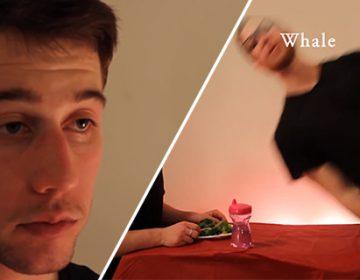 Hilarious video illustrates how animals eat their food | MisterEpicMann