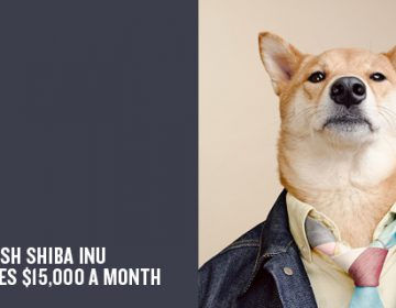 The Stylish Shiba Inu Who Makes $15,000 a Month