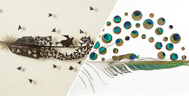 Intricate Feather Artworks | Chris Maynard