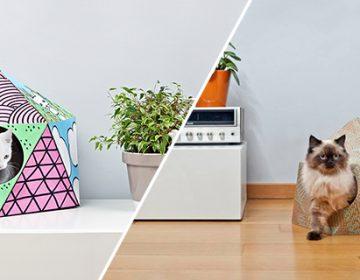 Cat Cube | Delphine Courier