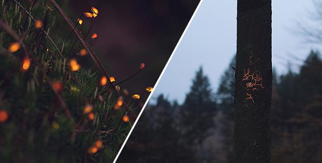 Bioluminescent Forest | Mawad & van Schoor