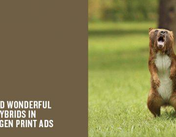 Small but ferocious animal hybrids | Volkswagen ads