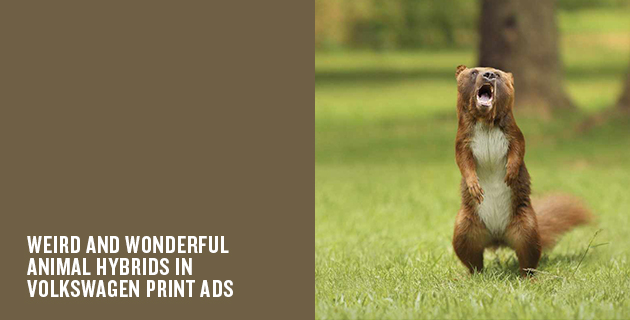 Small but ferocious animal hybrids | Volkswagen ads