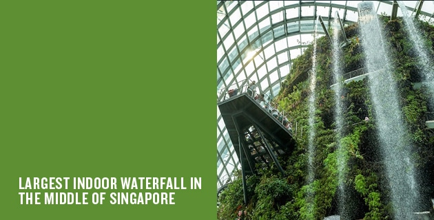 Gardens by the Bay | Cloud Forest
