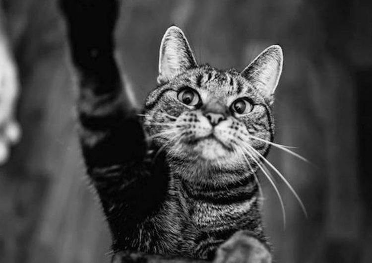 Cat Portraits | Felicity Berkleef
