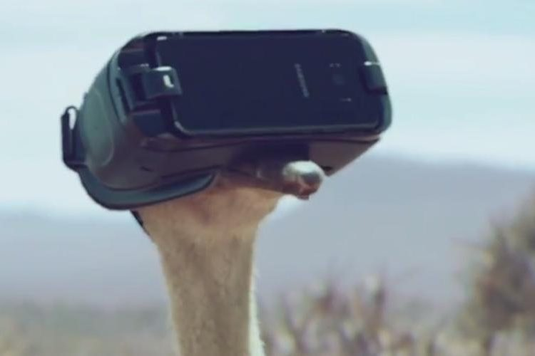 Watch An Ostrich Try To Fly
