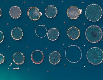 Surreal Aerial Views of Fish Farms